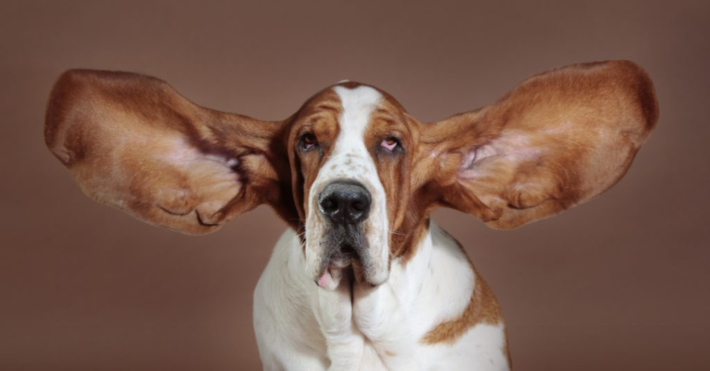 It's Not Just Your Dog or Cat, Humans Perk Their Ears Too