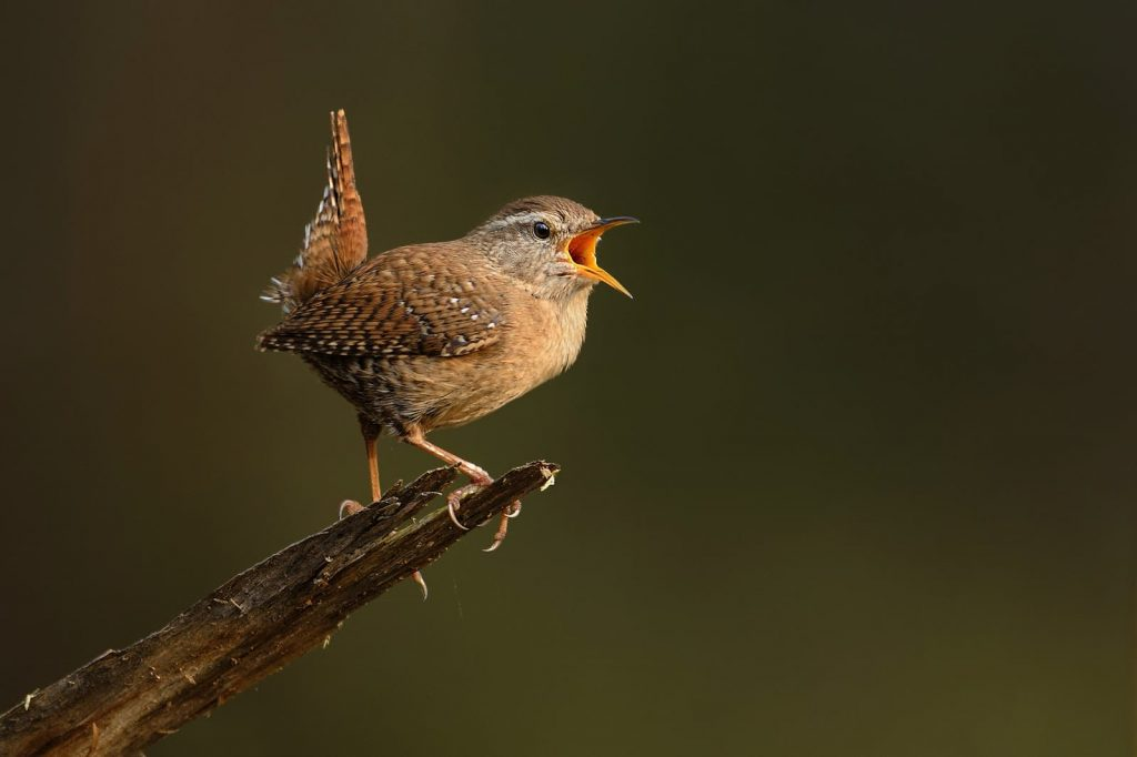 Music, Voices, Birds Singing? Most Missed Sounds from Hearing Loss
